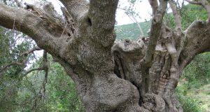 oude zielen hsp reincarnatie vorige levens